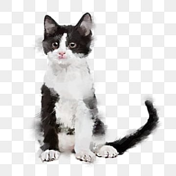 Cat Png Images Download 13 129 Cat Png Resources With