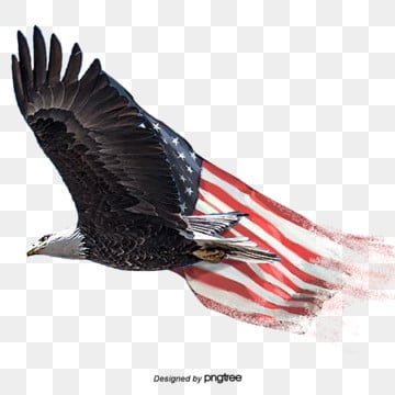 Bald Eagle PNG Images | Vector and PSD Files | Free Download on Pngtree