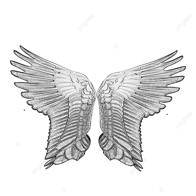 Pencil Sketch Wings Drawing Png Clip Art Wings Wings Drawing Wings Png Png Transparent Clipart Image And Psd File For Free Download