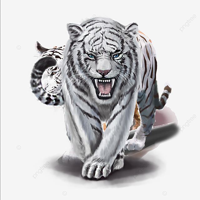 White Tiger Png, Vector, PSD, And Clipart With Transparent