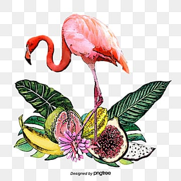 flamingo hand painted fruit elements, Leaf, Summertime, Carambola PNG and PSD