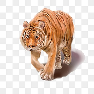 Tiger PNG Images, Download 1,823 Tiger PNG Resources with