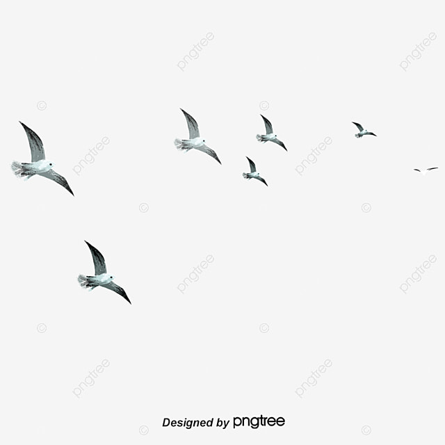 Flying Birds, Animal, Soar To Great Heights, Bird PNG Transparent