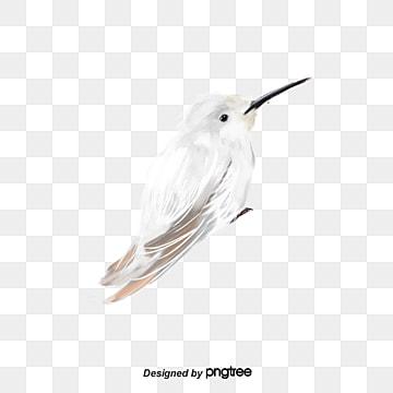 飛鳥動物飛禽小鳥, 動物, 小鳥, 插畫 PNG和PSD圖片素材
