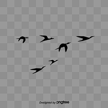 黑色動物飛禽飛鳥, 動物, 展翅高飛, 飛禽 PNG和PSD圖片素材