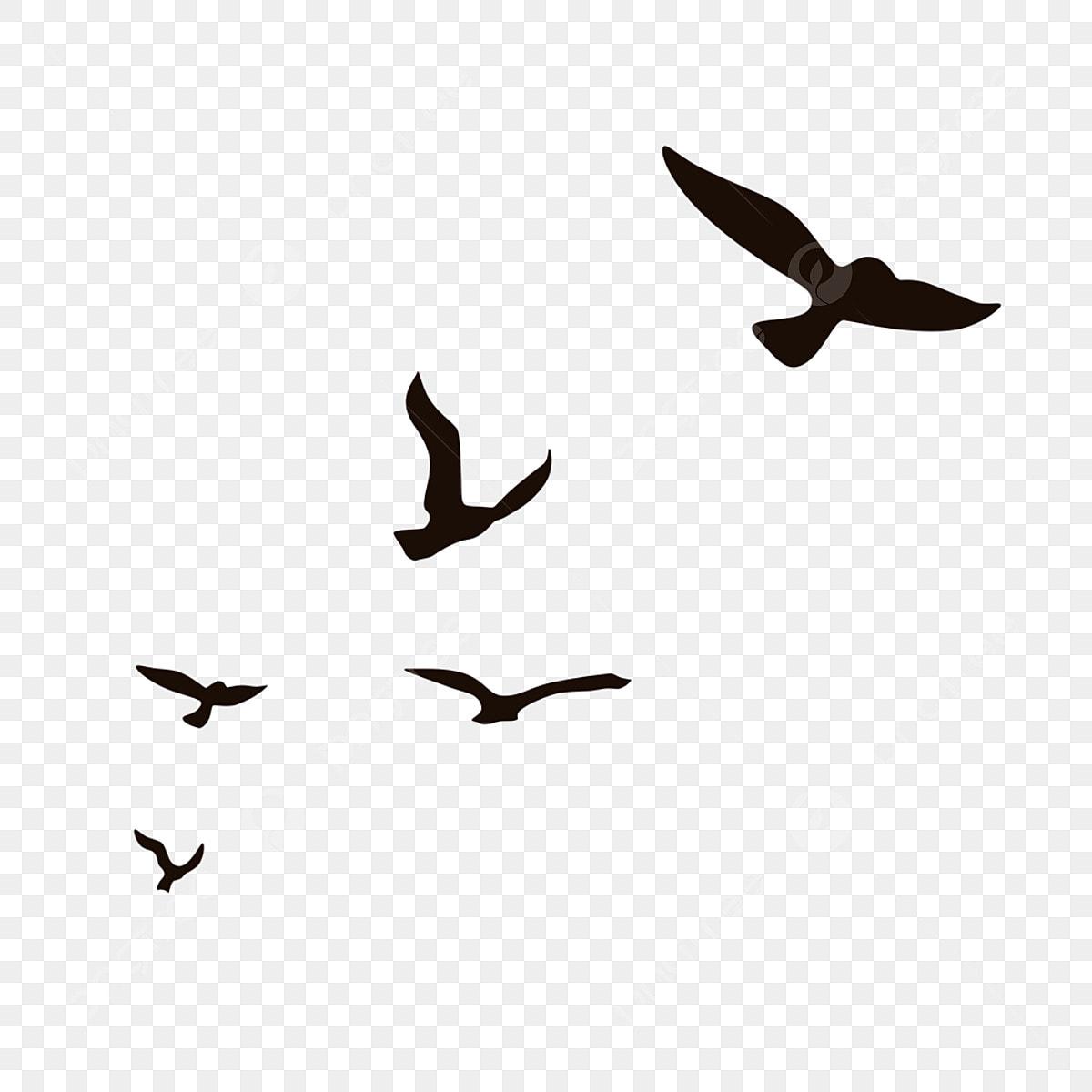 Terbang Siluet Burung Kecil Terbang Kawanan Burung Camar