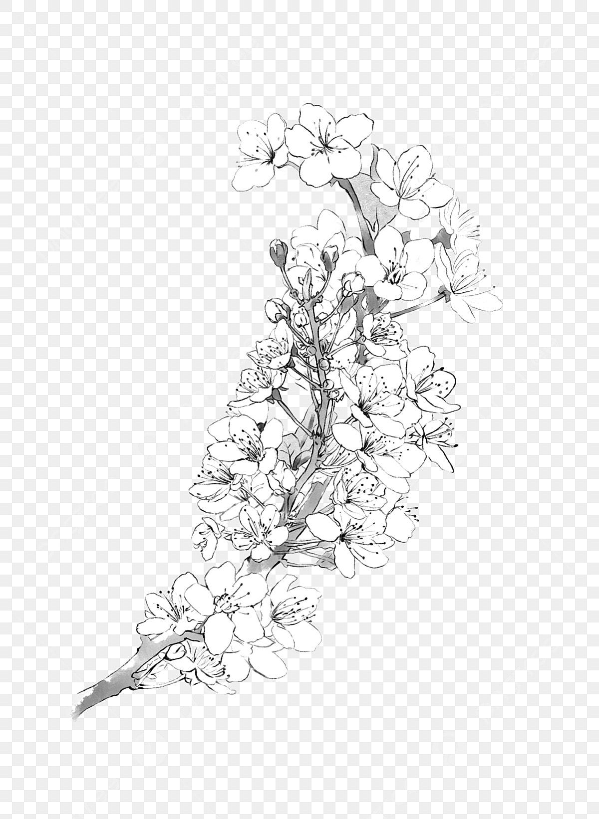 Fleur De Cerisier Fleur De Poire Branche De Fleur Noir Et