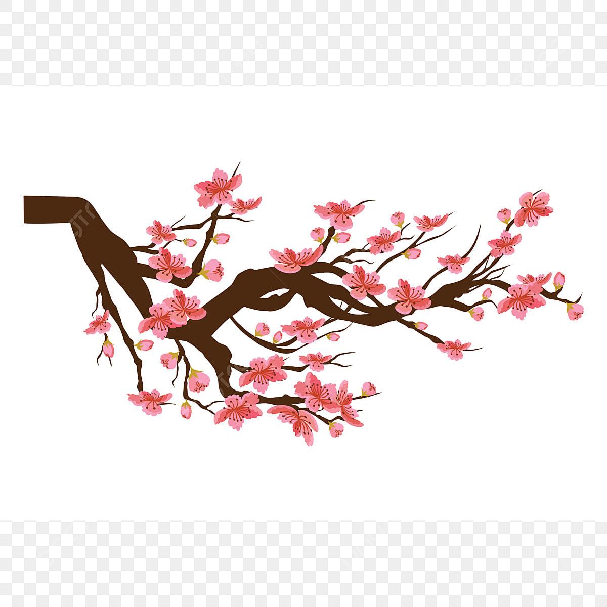 Chinese New Year. Sakura Flowers Background. Cherry ...