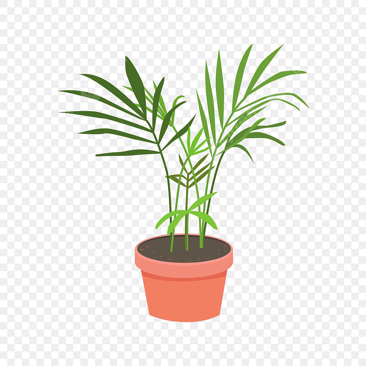 Piante Tropicali Da Interno elementi in vaso per interni tropicali di piante da cocco