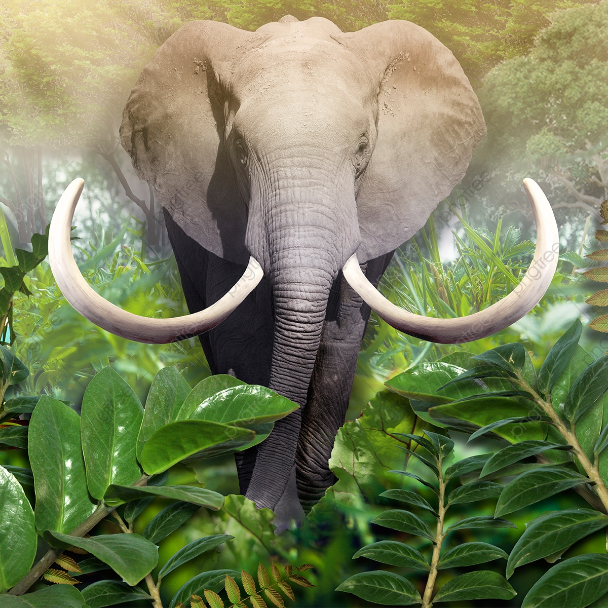 3d Logo Wall Mockup Psd: Elephant Out Of The Jungle Wallpaper For Wall 3d