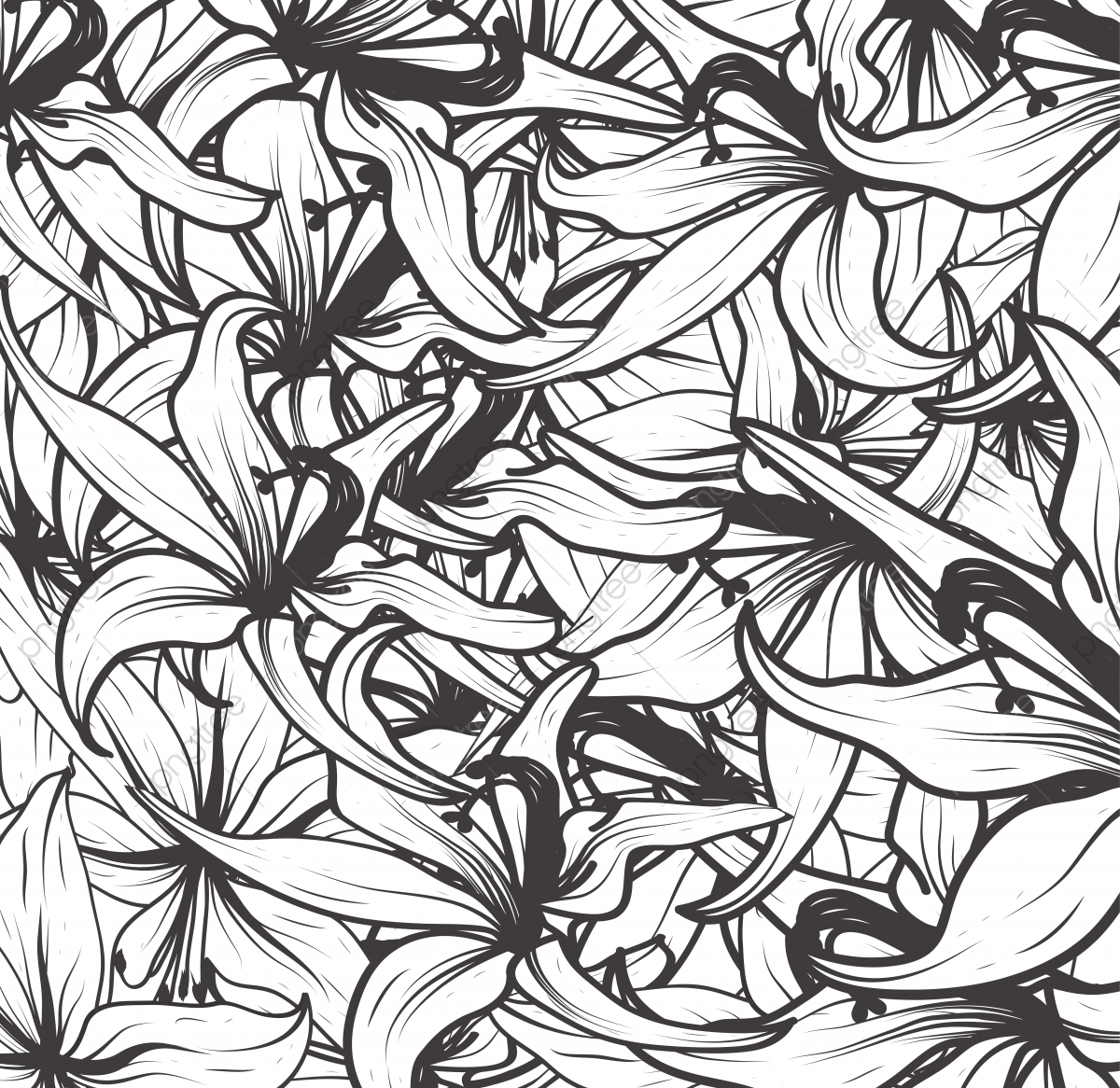 Flower Illustration Pattern Black And White Line Art Floral