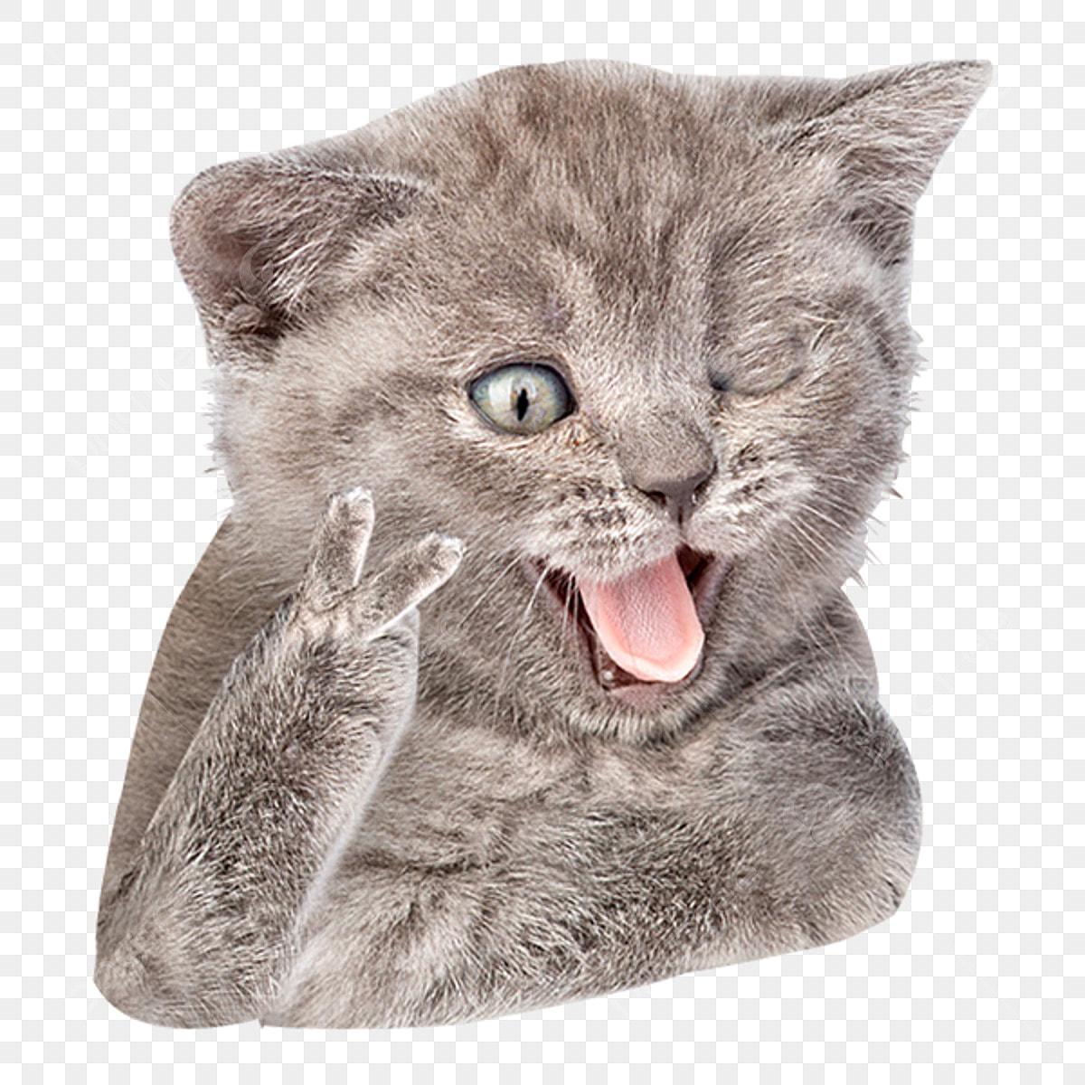 Couple De Kitty Avec Un Sourire Langue Drôle De Chat Selfie, Adorable, Animal, Contexte Fichier ...