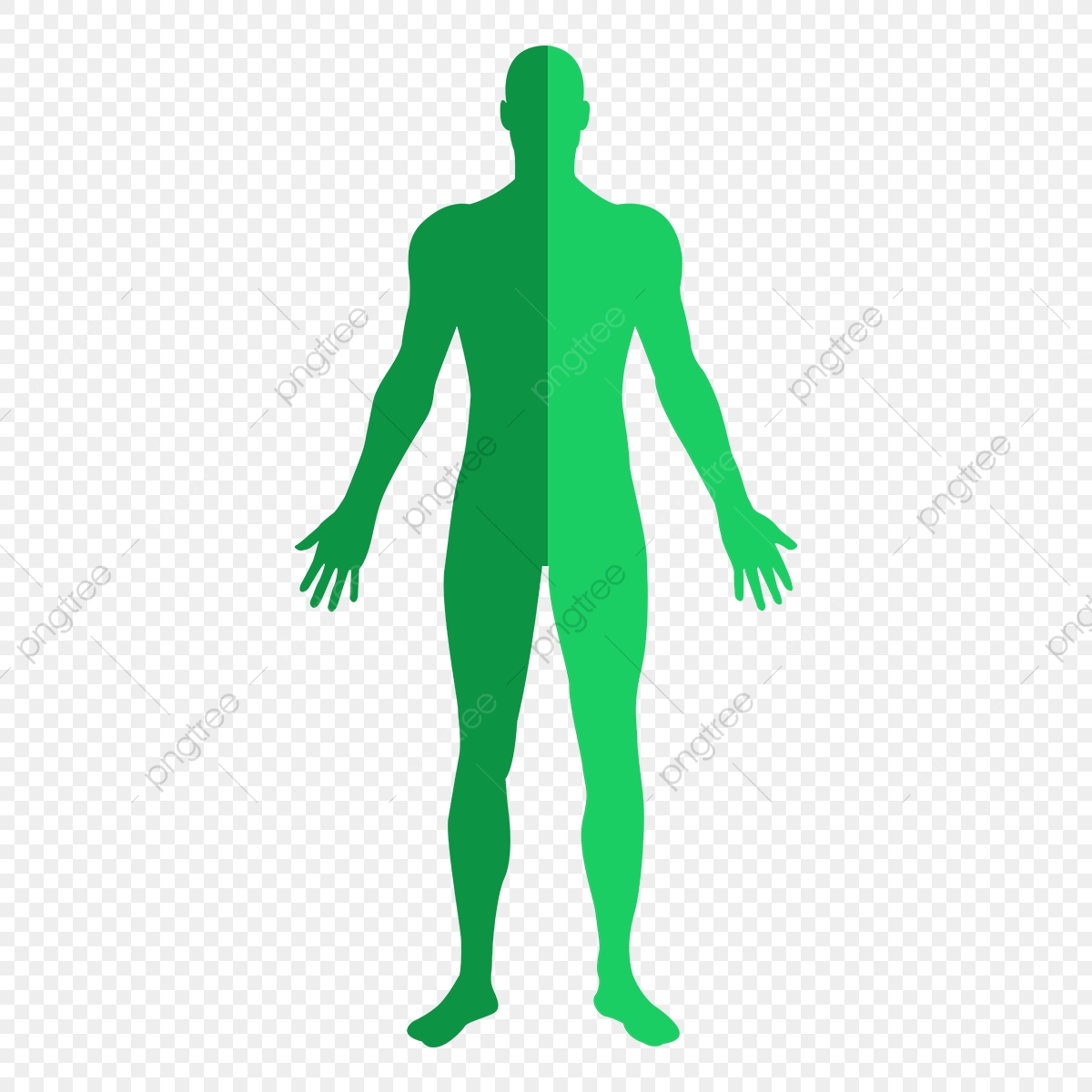 human body png images vector and psd files free download on pngtree https pngtree com freepng human body info graphics 4093233 html