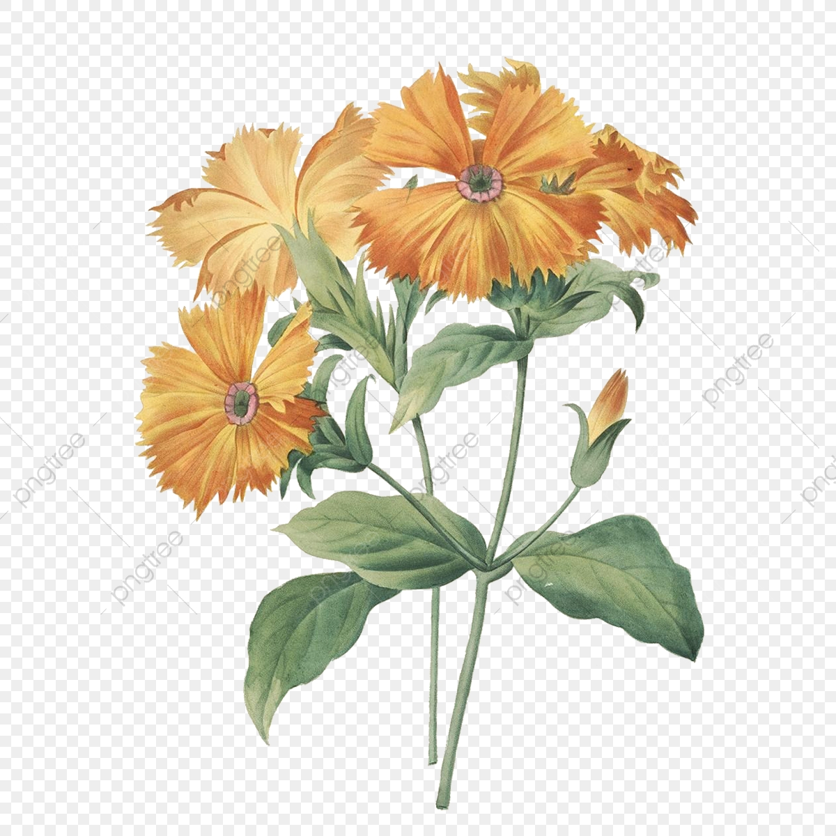 Beautiful Orange Business Card:  Orange Vintage Flower, Painting, Flowers, Hand Painted PNG