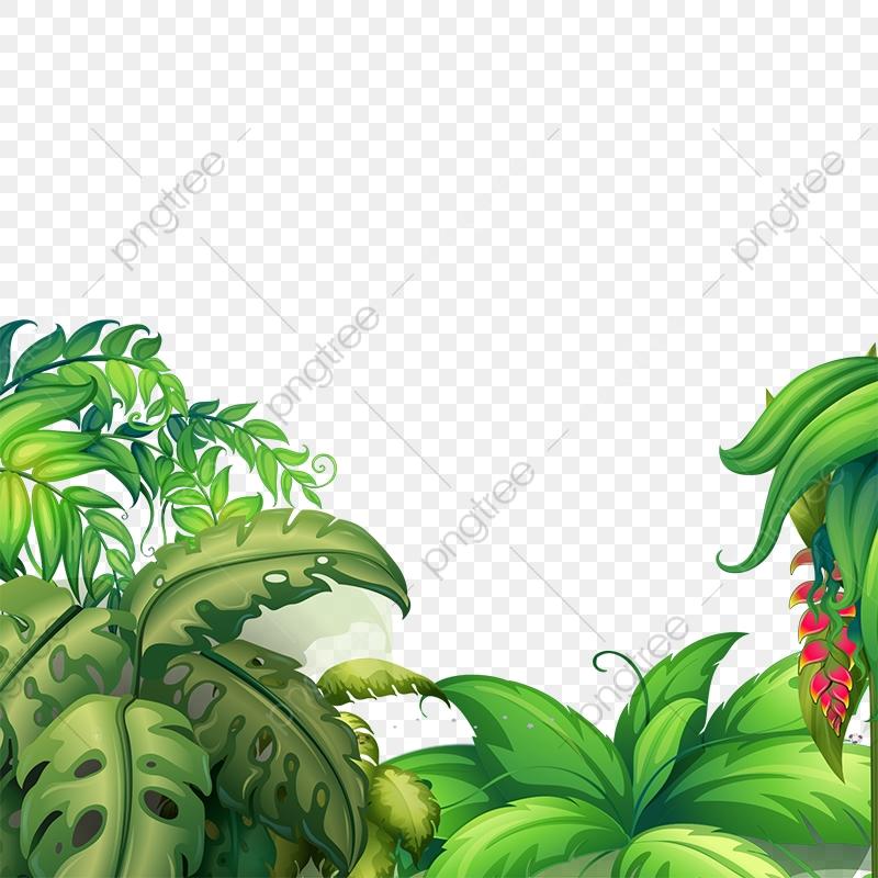 Flores Tropicais Png Tropical Flores Flores Tropicais