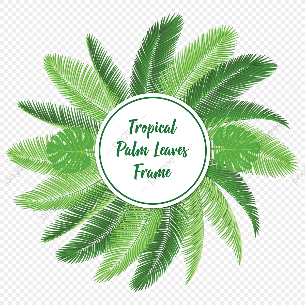Tropical Palm Leaves Frame With Typography Tropical Leaf Palm Leaf Png And Vector With Transparent Background For Free Download Tropical jungle leaves frame on pink background vector. https pngtree com freepng tropical palm leaves frame with typography 3556306 html