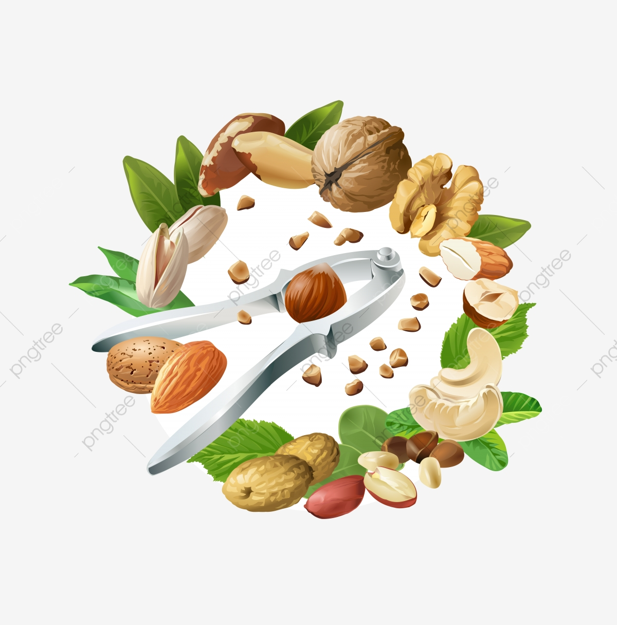 Vector Illustration Mix Of Different Types Nuts, Nuts, Nut