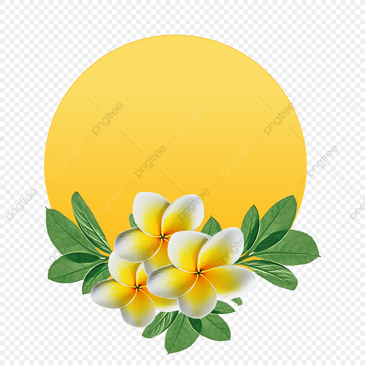watercolor flower yellow flowers round background flowers flower natural png transparent clipart image and psd file for free download https pngtree com freepng watercolor flower yellow flowers round background 4049365 html