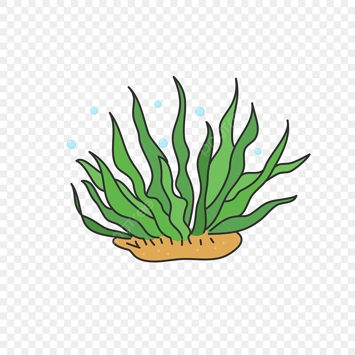 dessin anim u00e9 de main dessin u00e9 des algues mer plante