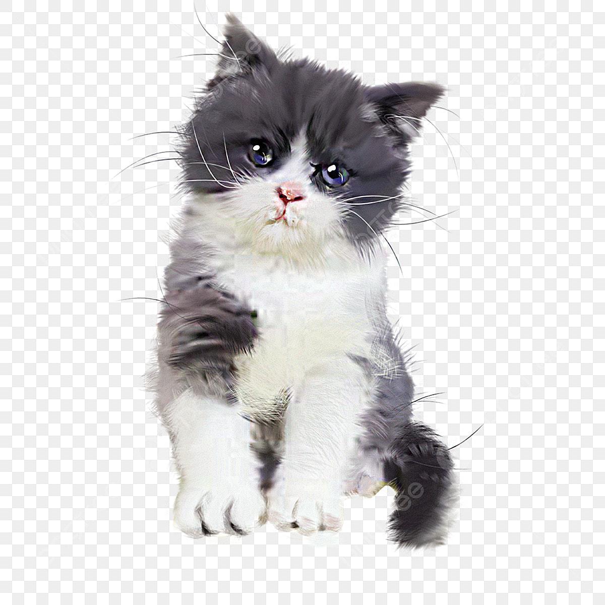 Gambar Cute Anak Kucing Kelabu Tangan Ditarik Ilustrasi Unsur Unsur Haiwan Cantik Kucing Domestik Png Dan Psd Untuk Muat Turun Percuma
