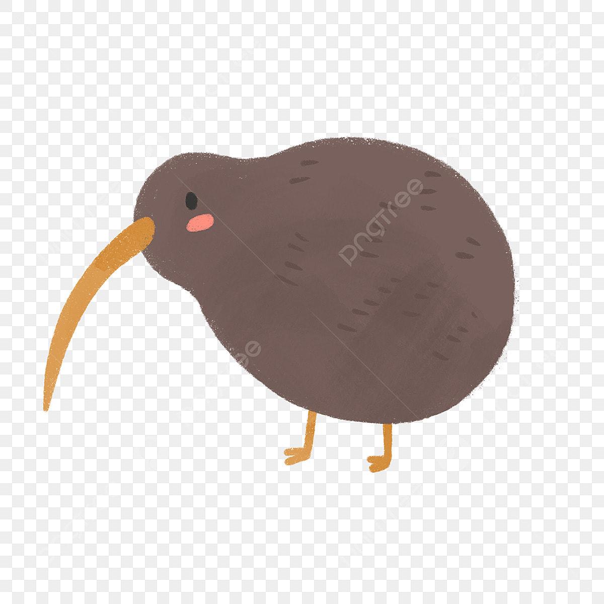 Hand Drawn Cute Kiwi Bird Kiwi Bird New Zealand Hand