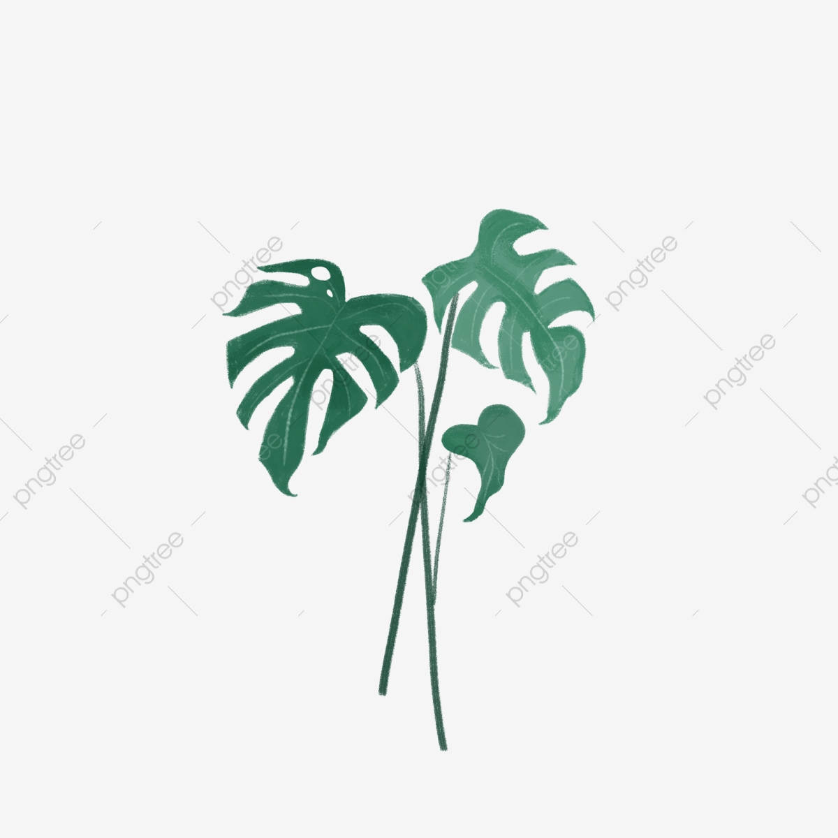 ต้นมอนสเตอร่าสีเขียวภาพประกอบมือวาดฉากในร่ม, เครื่องประดับ, โปสเตอร์,  รายการเล็ก ๆภาพ PNG และ PSD สำหรับดาวน์โหลดฟรี