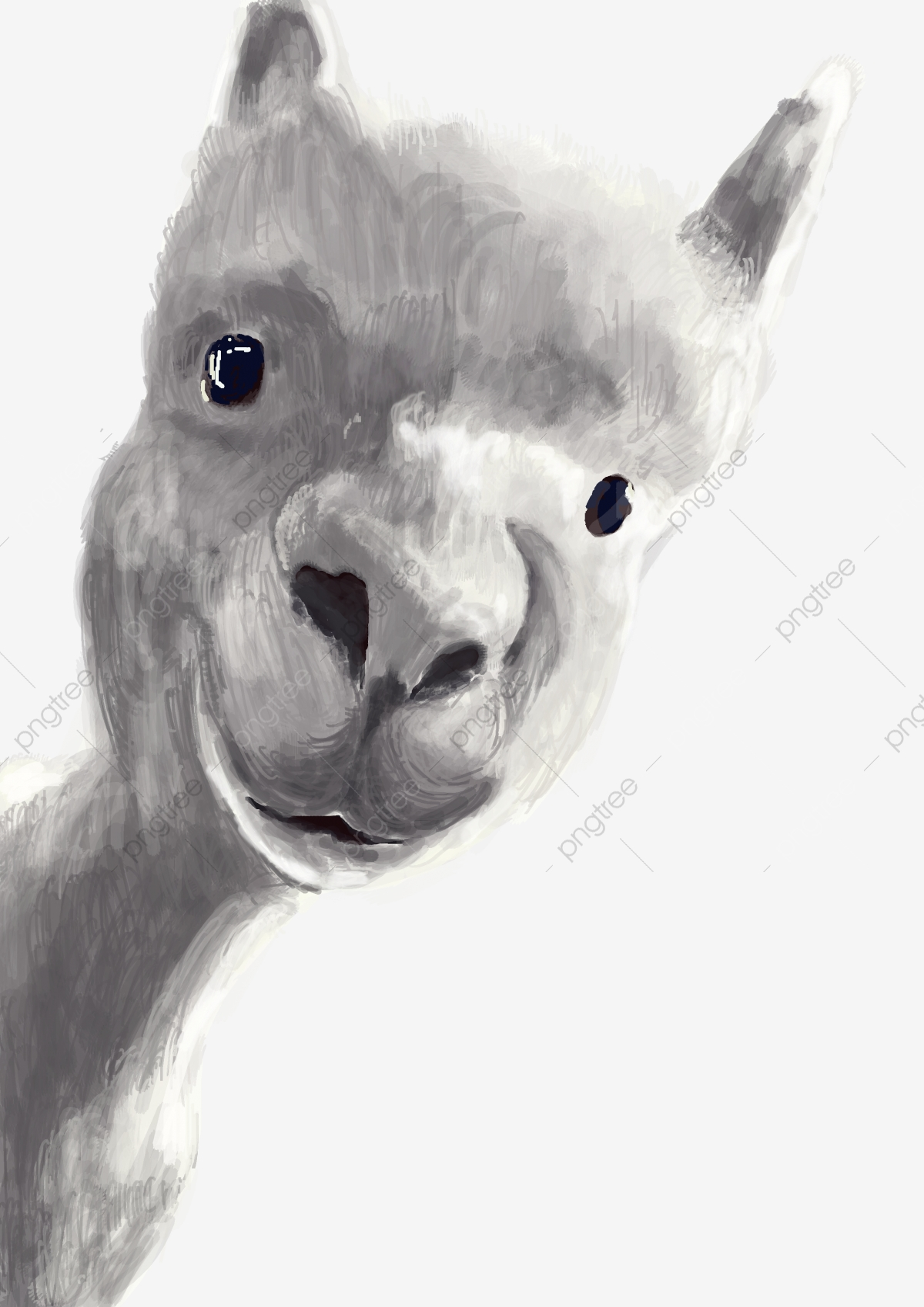Illustration Animale Dessin Animalier Réaliste Cartoon