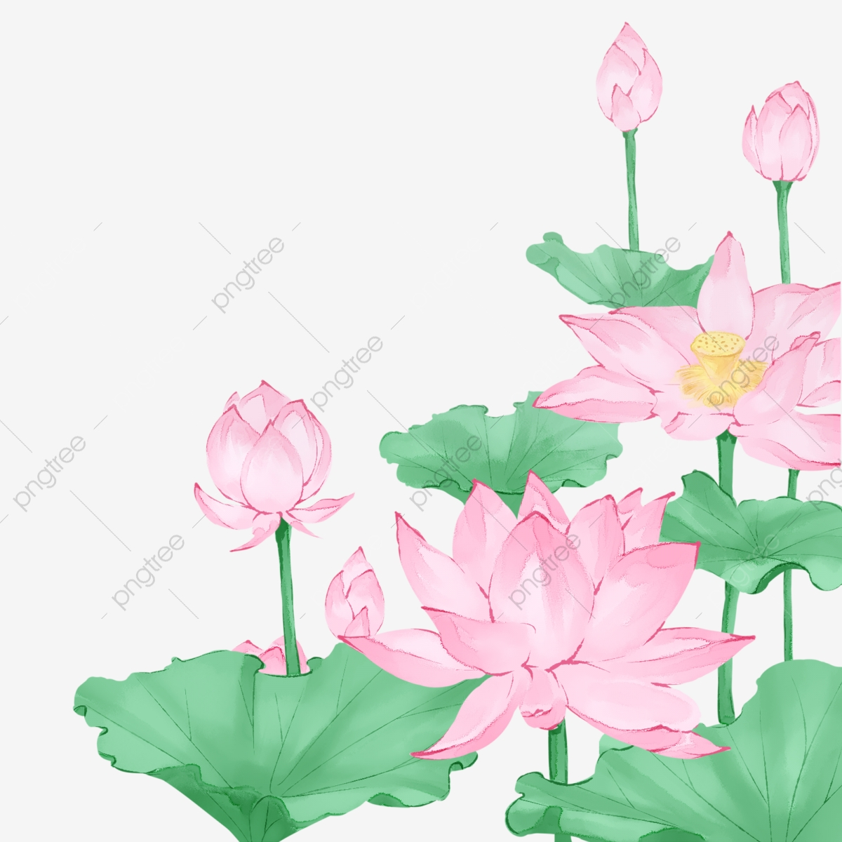 Chinese Style Hand Painted Lotus Flower Lotus Leaf Plant Leaf Png