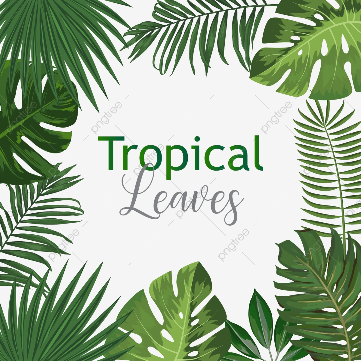 Tropical Leaves Png Vector Psd And Clipart With Transparent Background For Free Download Pngtree Find the perfect tropical leaf pattern stock illustrations from getty images. https pngtree com freepng creative exotic botanical tropical leaves with text vector 4236231 html