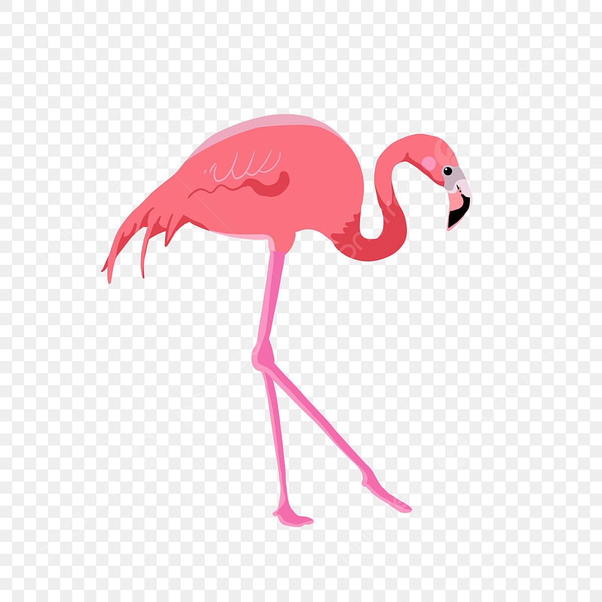 Flamingo summer. Animal cartoon png transparent