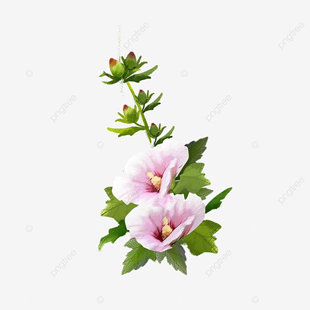 hibiscus syriacus l peindre hibiscus syriacus plante fichier png et psd pour le t u00e9l u00e9chargement libre