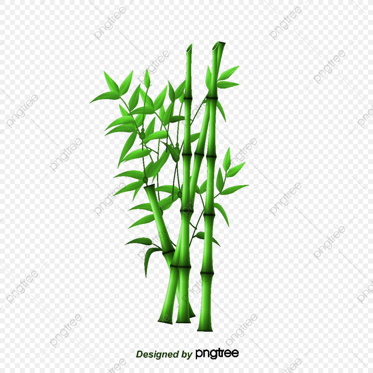 Bambou Bambou Dessin Les Feuilles De Bambou Fichier Png