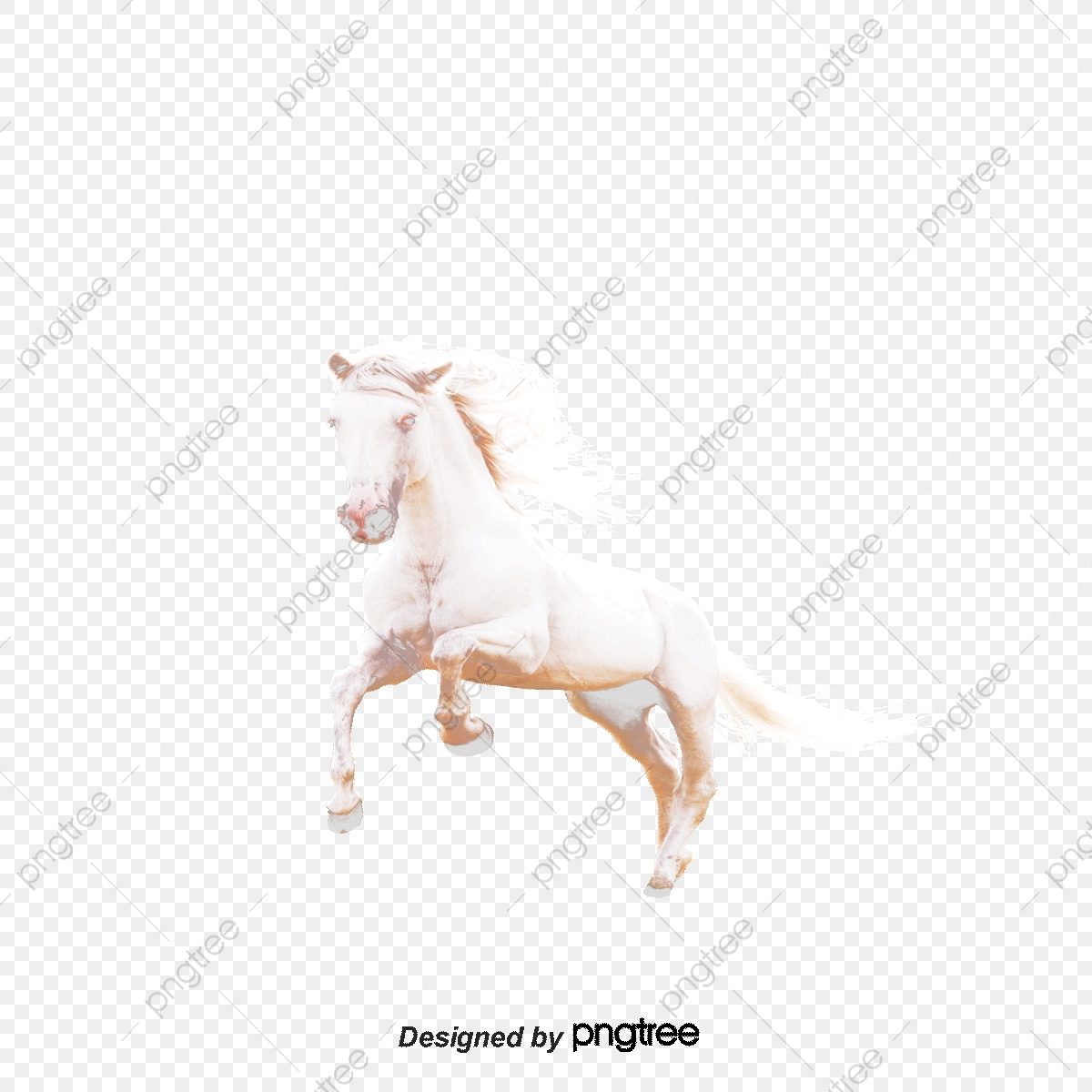 Beautiful White Horse Horse Clipart Whitehorse Horses Png Transparent Clipart Image And Psd File For Free Download