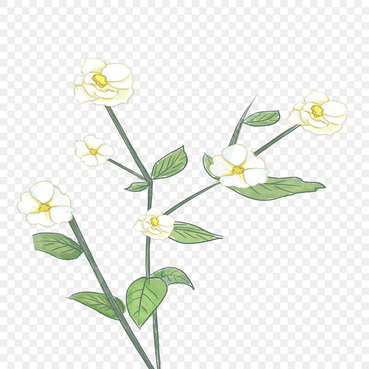 Des Fleurs En Noir Et Blanc Dessin De Plantes De Belles