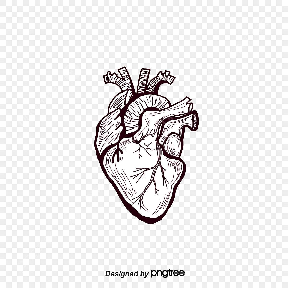 فيغ رسمت القلب الأسود القلب جسم الإنسان عضو Png وملف Psd