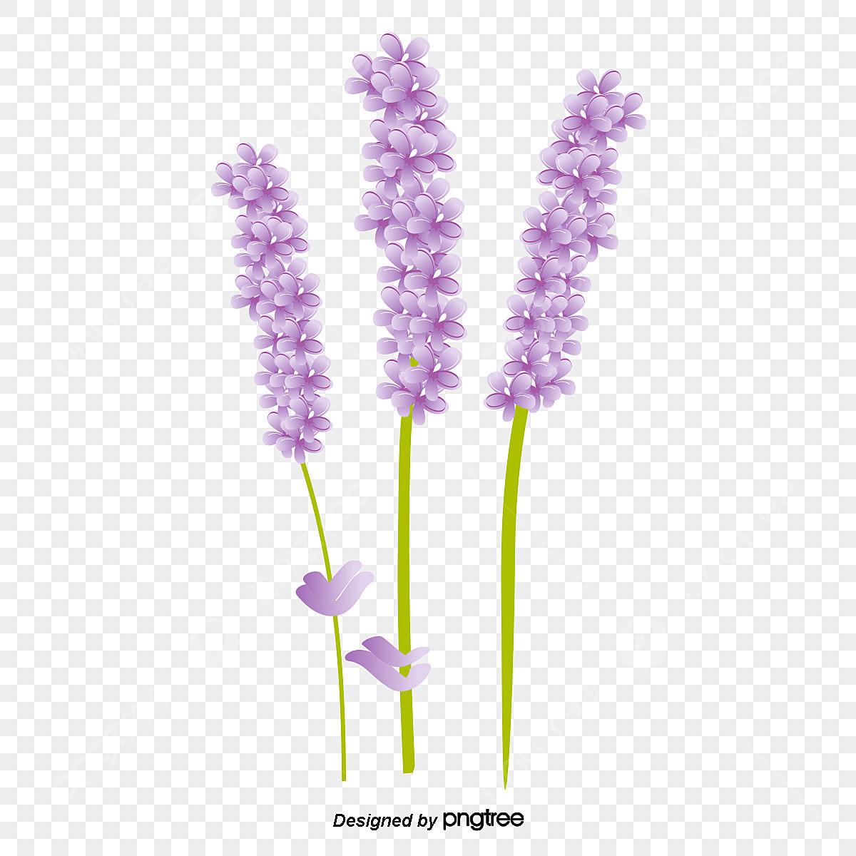 無料ダウンロードのためのラベンダー ラベンダー 紫 清新png画像素材
