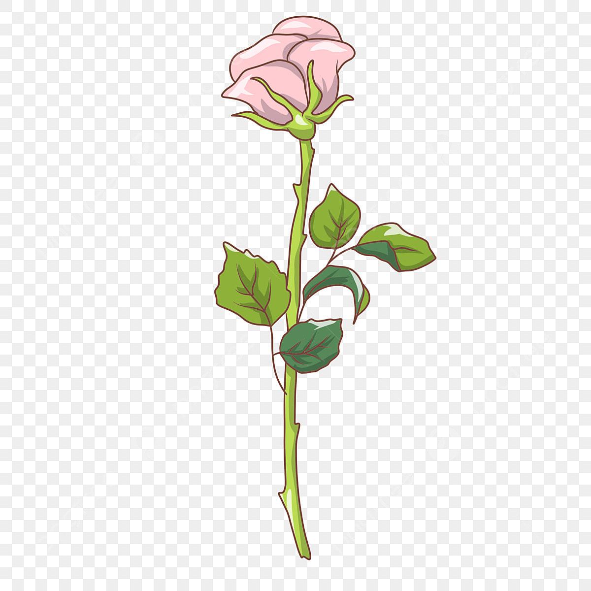 ورود الورود الأرجواني ورود جميلة روز زهرة الديكور Png وملف Psd للتحميل مجانا
