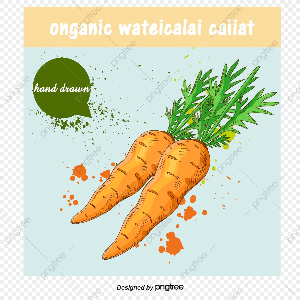 Vector Drawing Carrot Watercolor Vegetables Vector Vegetables