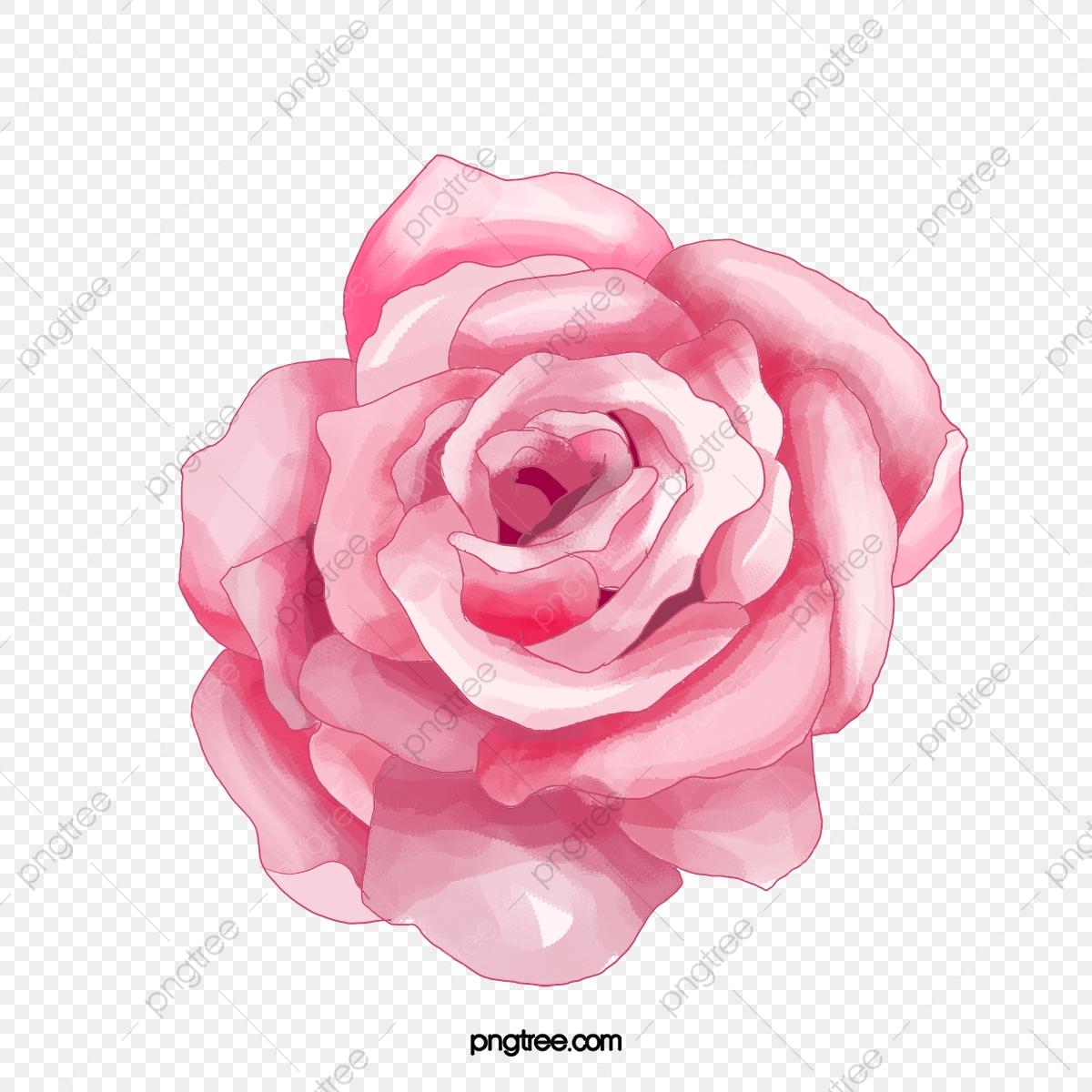 Acuarela Pintada De Rosa Flores Rosas Acuarela Pintado A