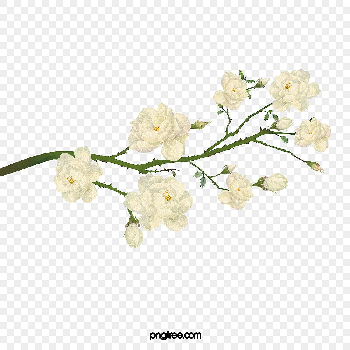 أبيض زهور زخرفة الإطار Png وملف Psd للتحميل مجانا