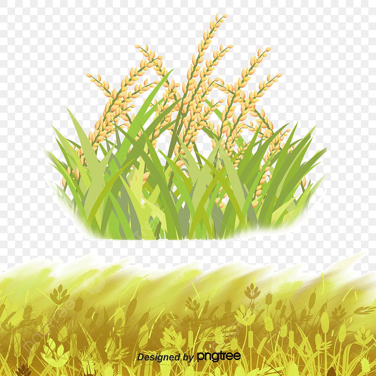 Farmers Harvesting Rice Stock Illustrations, Images & Vectors | Shutterstock