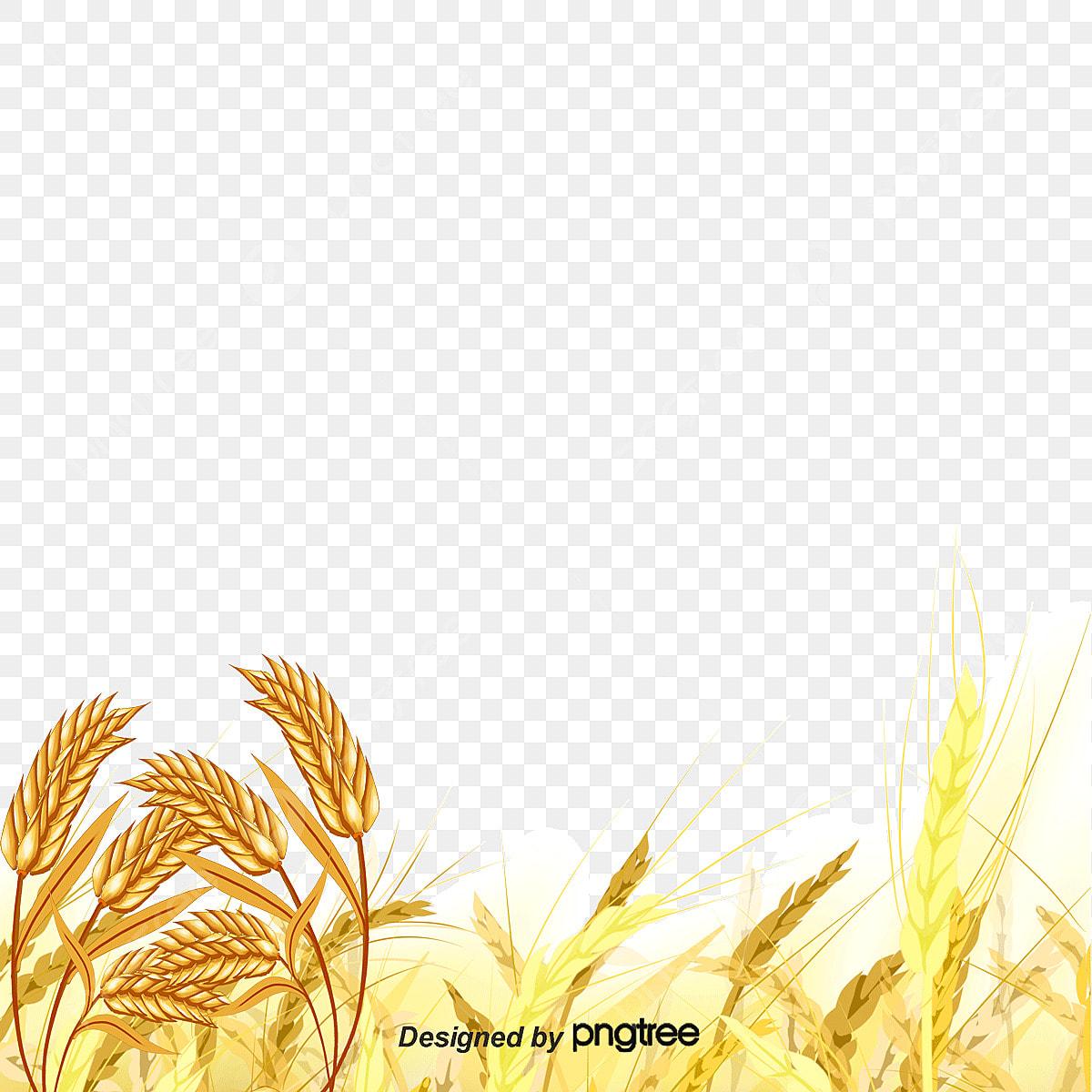 wheat field clipart - Clip Art Library
