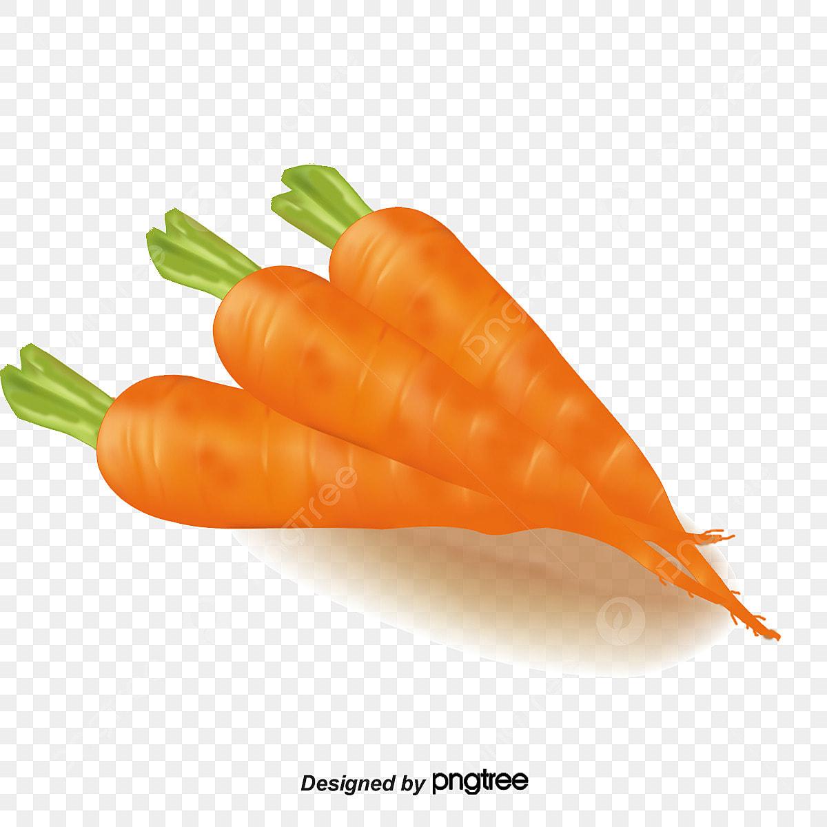Zanahoria Zanahoria Verde Verduras Png Y Psd Para Descargar Gratis Pngtree Ho ho ho🎅🐰 la naviada ya llego a zanahoria refugios, y trajo con ella muchas ofertas para tu conejito. https es pngtree com freepng carrot 1536979 html