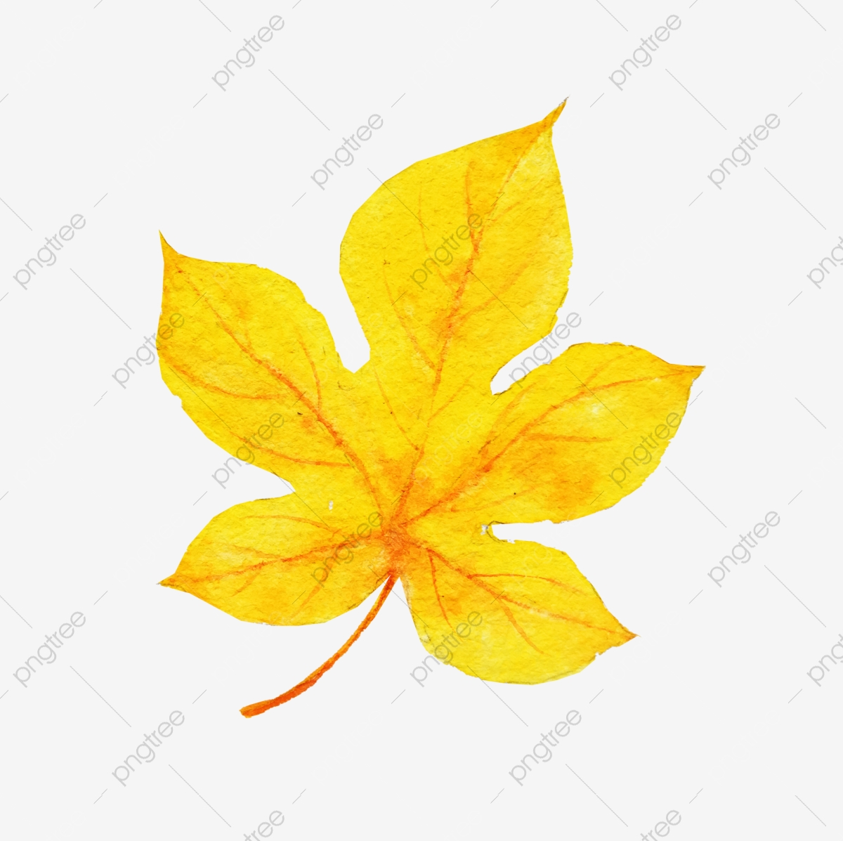 maple 15 free download