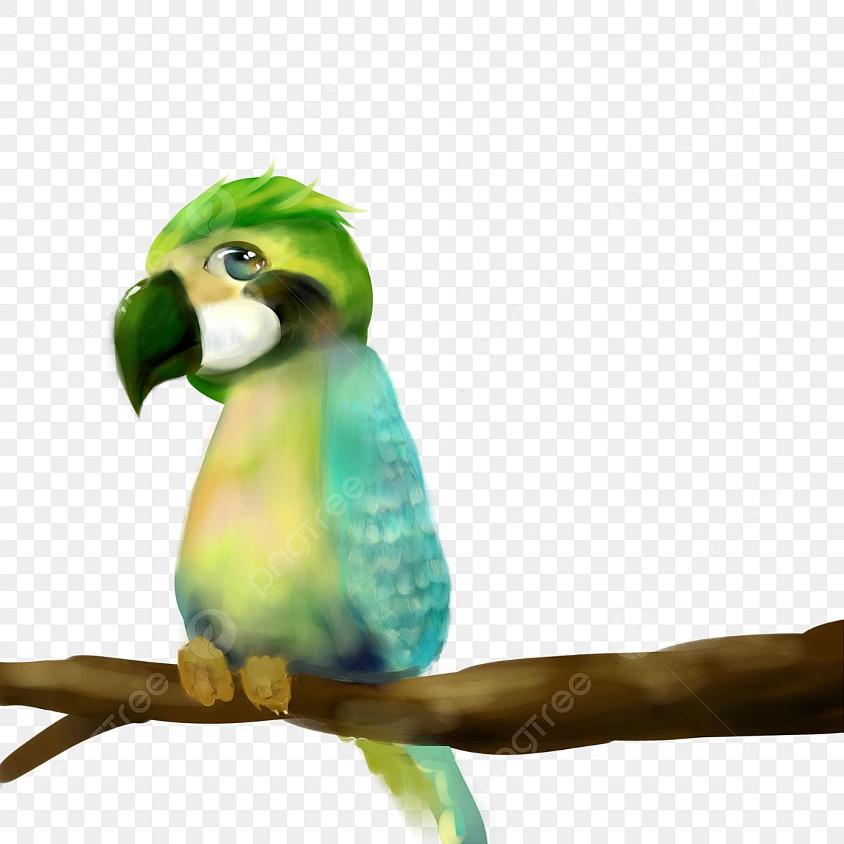 無料ダウンロードのための緑色鸚鵡インコ 動物 きれい 鳥png画像素材