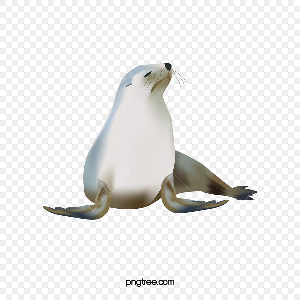 無料ダウンロードのための手描きアザラシ 手描き アザラシ 動物 Png画像