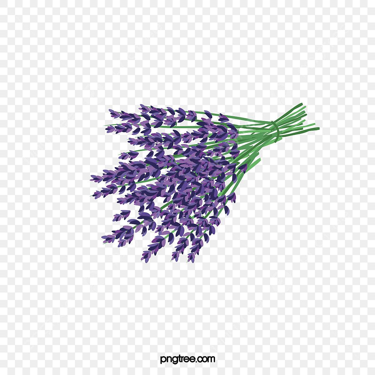 Vertu De La Lavande la lavande, la lavande, fleur, des fleurs violettes fichier
