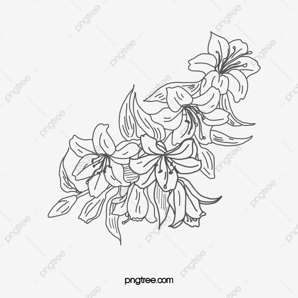 Des Fleurs Fleur Dessin Noir Et Blanc Fichier Png Et Psd