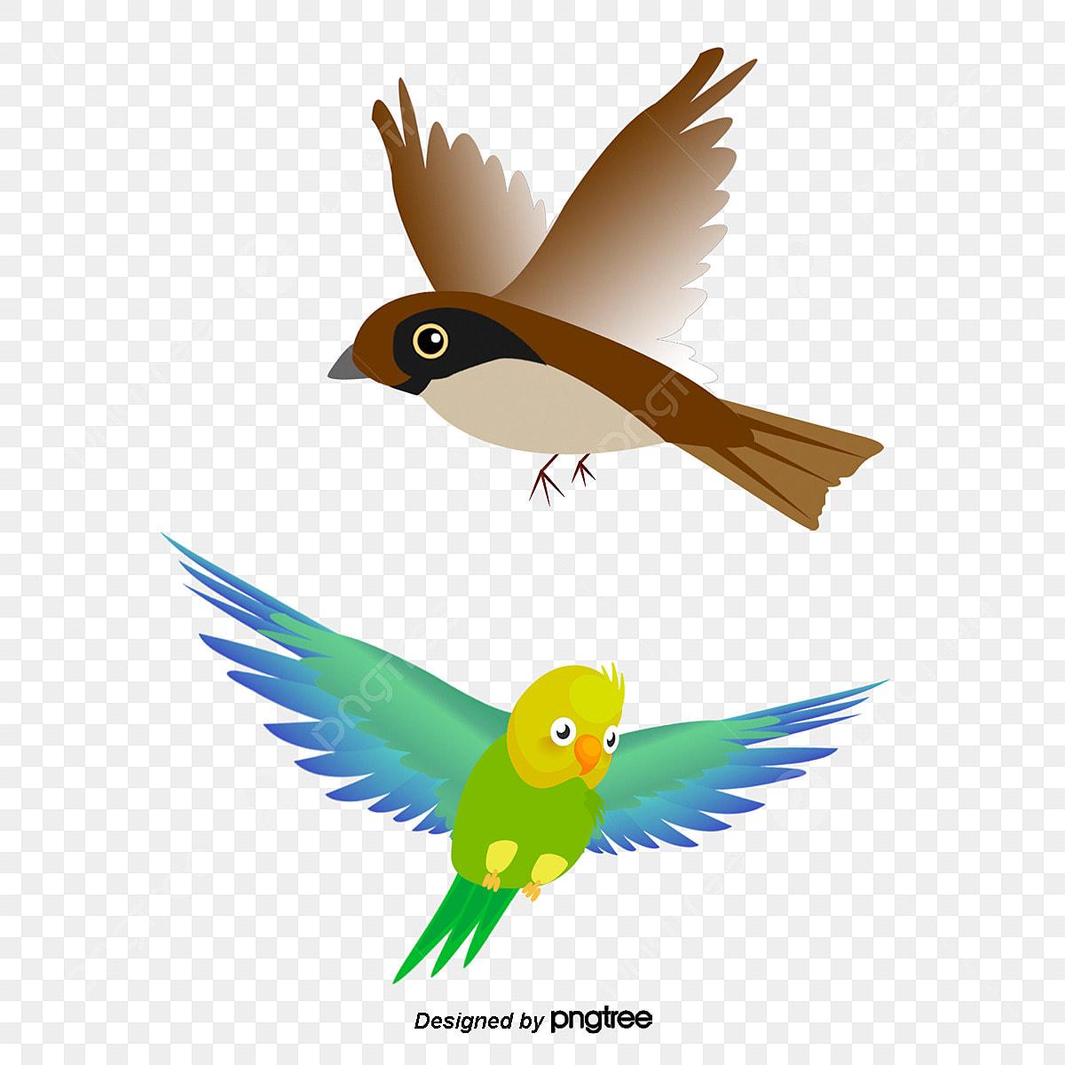 ببغاء عصفور الببغاء Clipart ببغاء طائر Png وملف Psd للتحميل مجانا
