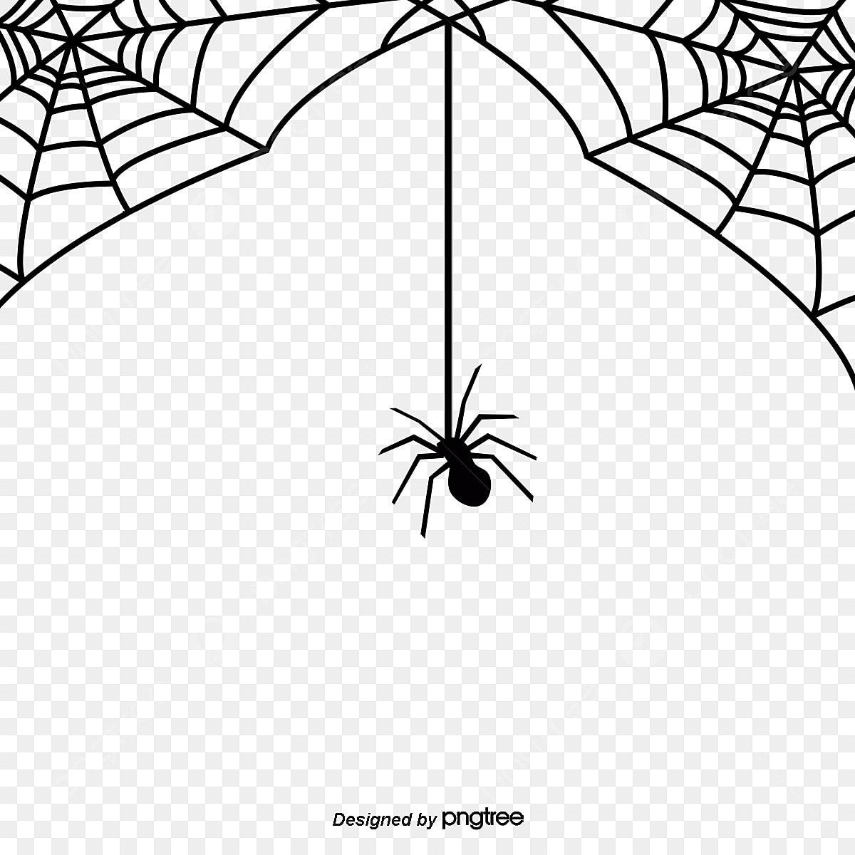 Toile D Araignée Toile D Araignée Araignée Halloween